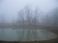 Image: Ghostly pond